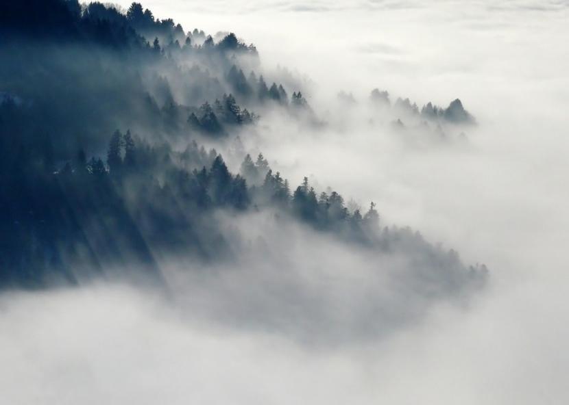 Banco de niebla