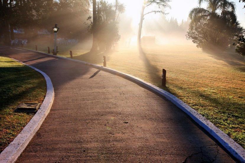 Neblina en el camino