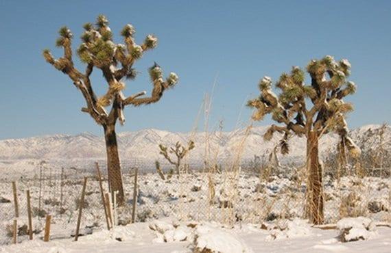 Desierto nevado