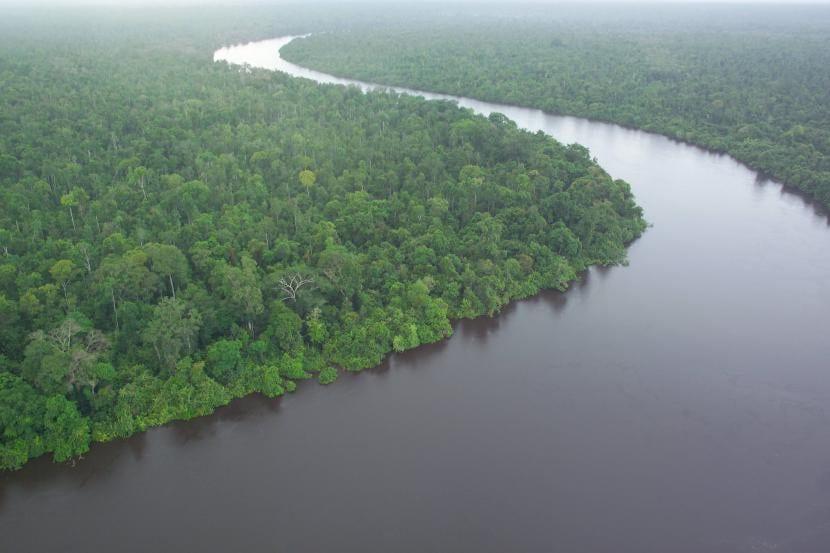 La jungla de Borneo
