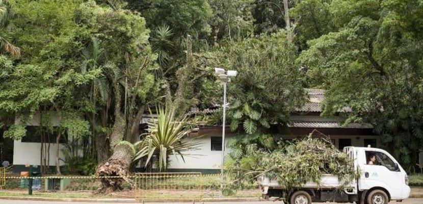 Árboles derribados en Sao Paulo