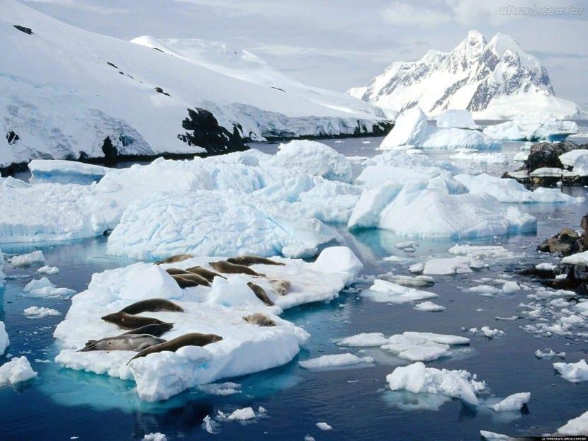 calentamiento antártida
