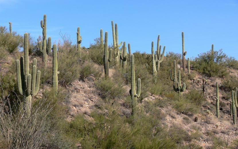 Flora del desierto