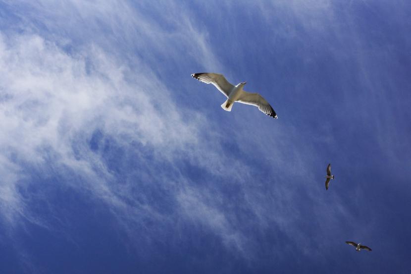 Gaviotas sobre el cielo azul
