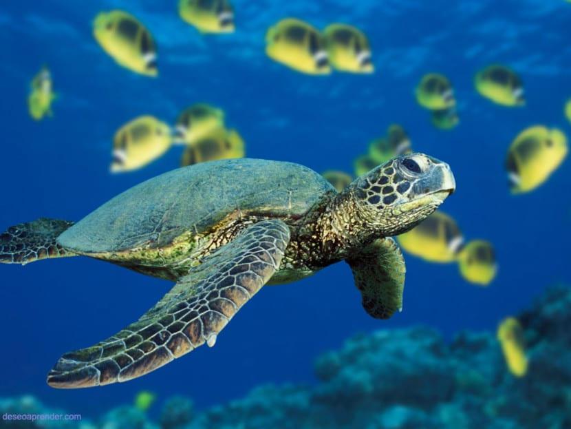 especies marinas en peligro de extinción