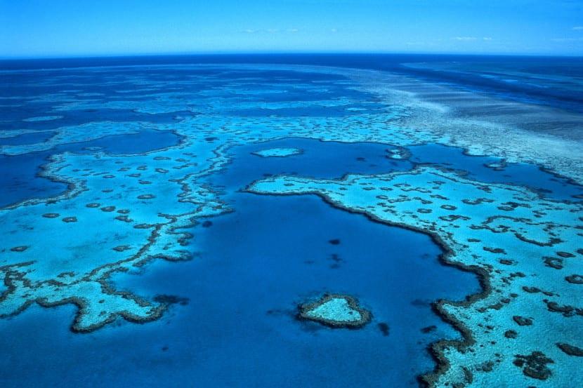 Gran barrera coral australiana