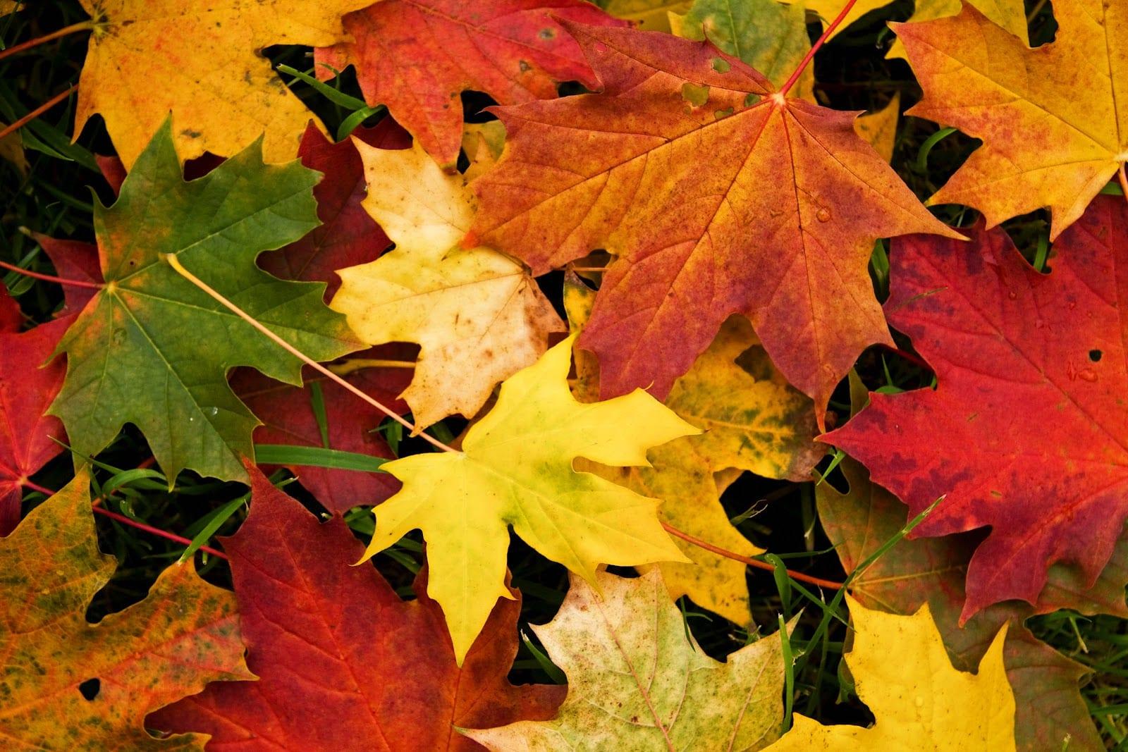 curiosidades sobre el otoño