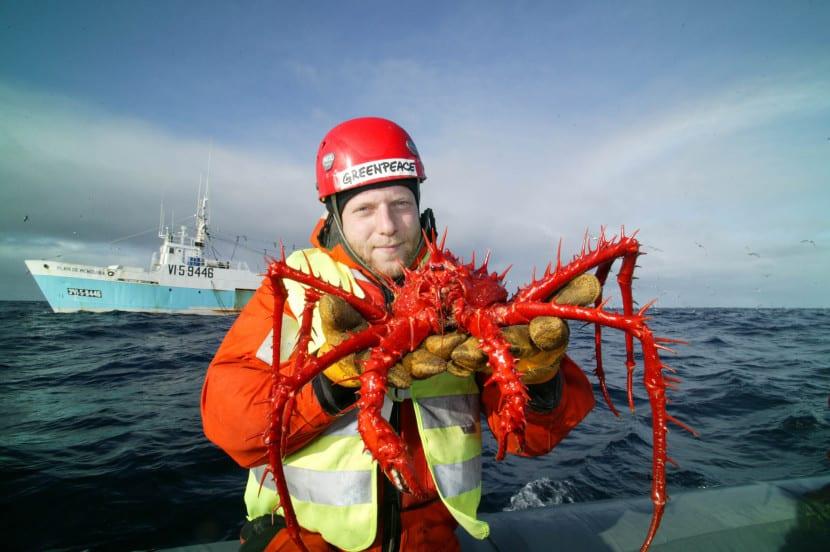 cangrejo rey en la Antártida