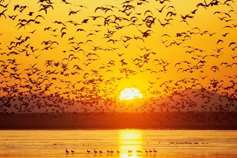 las aves son las emnsajeras del cambio climático