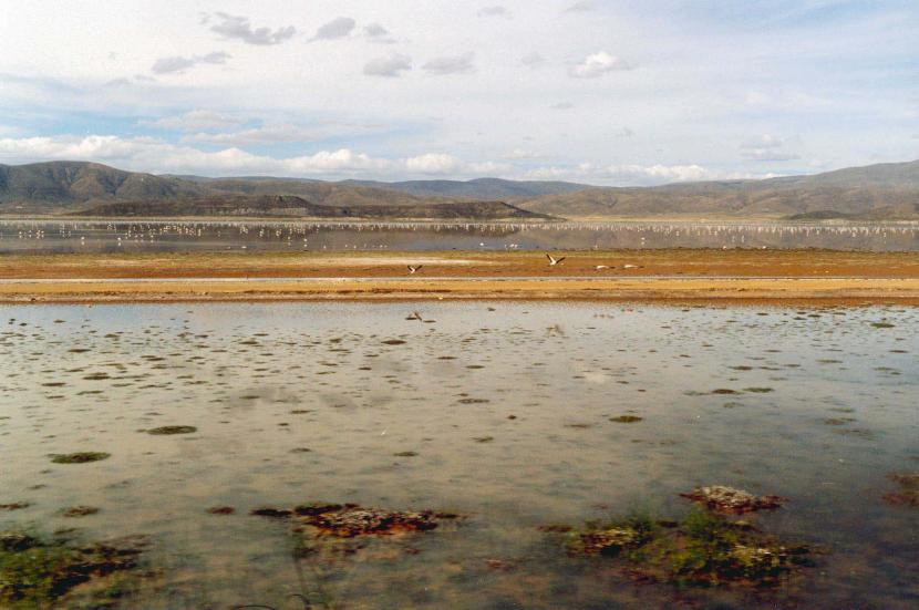 Lago Poopó con flamencos
