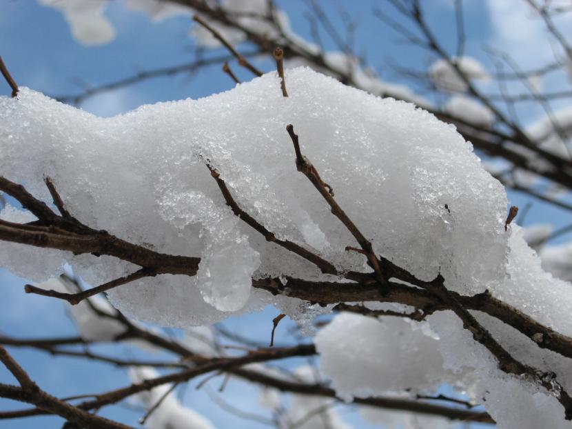Nieve en árbol