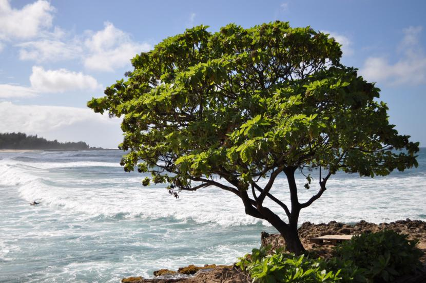 Árbol de Hwai