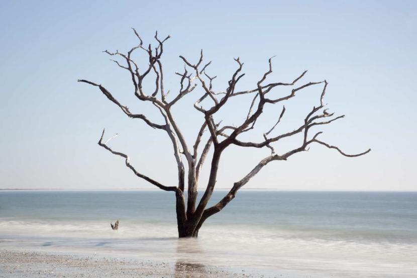Árbol seco en playa