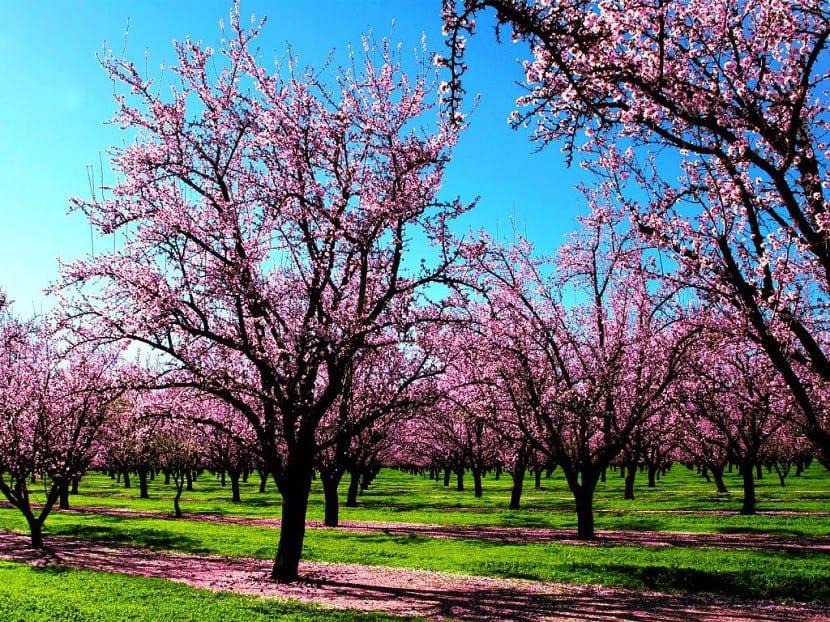 dia-que-empieza-la-primavera-4
