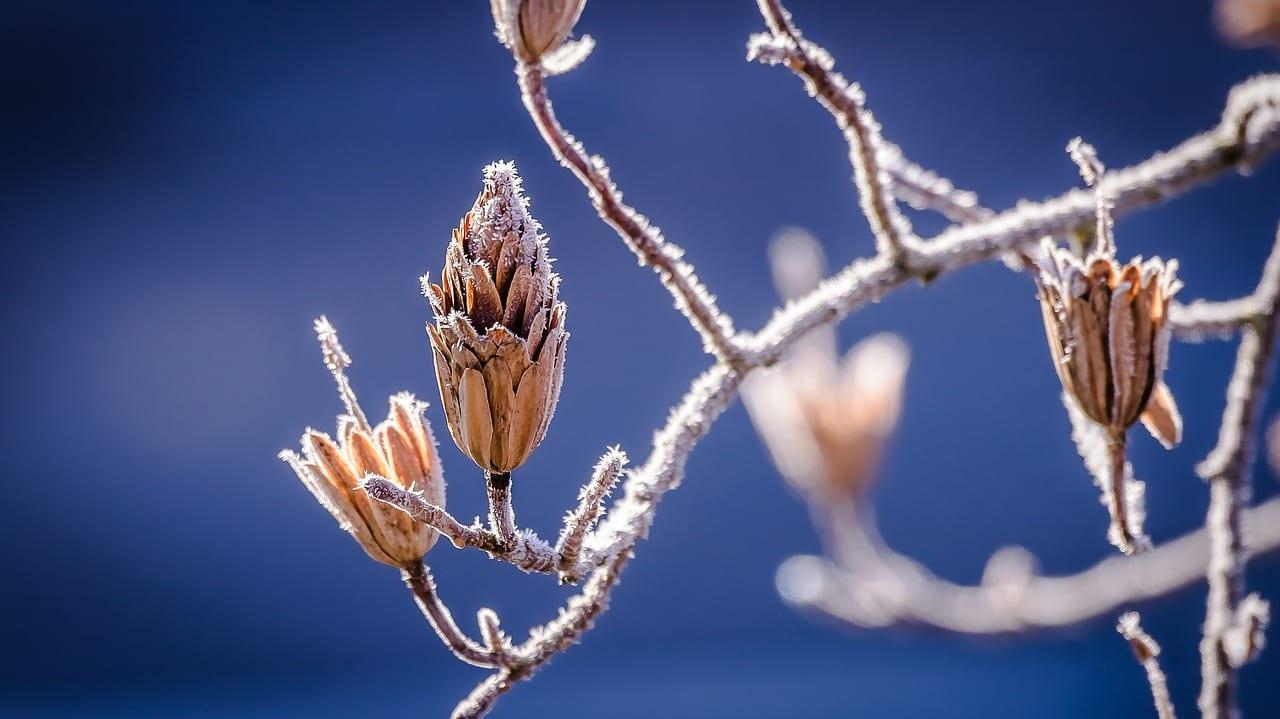 Empieza el invierno para la vegetación