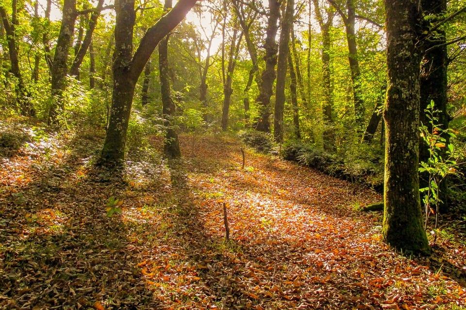 Bosque de Galicia