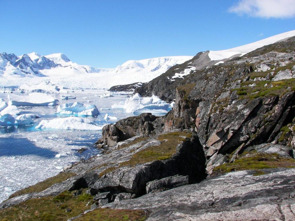 Musgo en el paisaje polar
