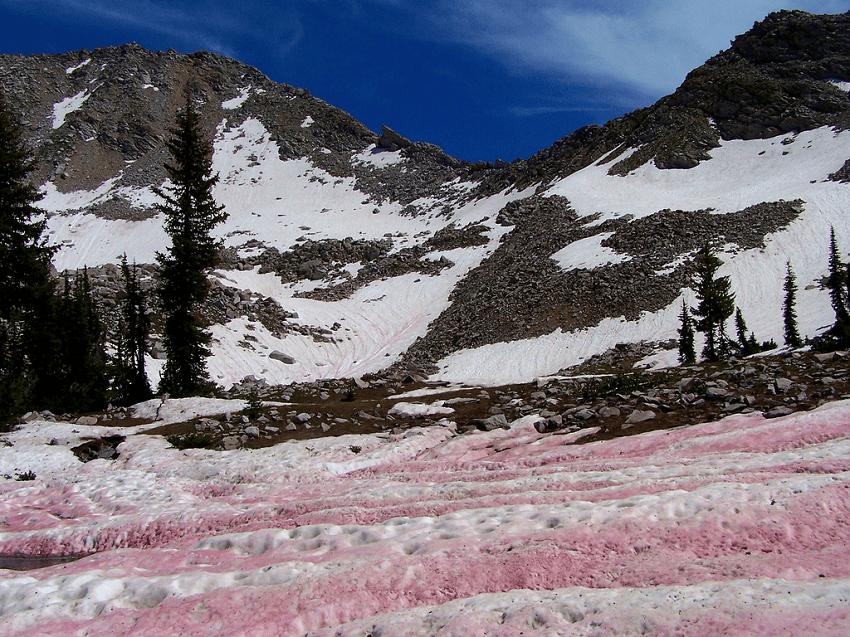 nieve-rosa-3