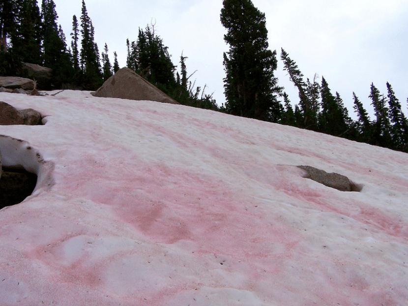 nieve-rosa-sandia