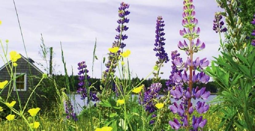 Las plantas intercambian más gases con la atmósfera de lo que creemos