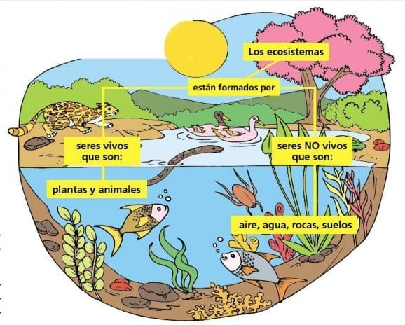 Factores bióticos y abióticos de la biosfera