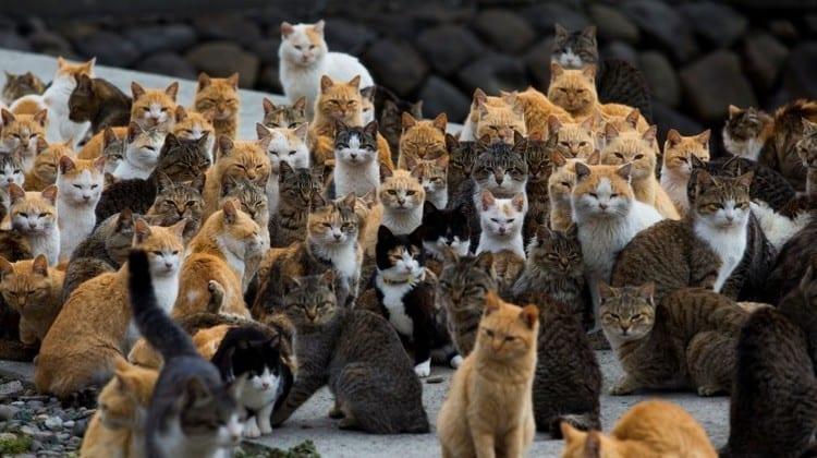 Población de gatos
