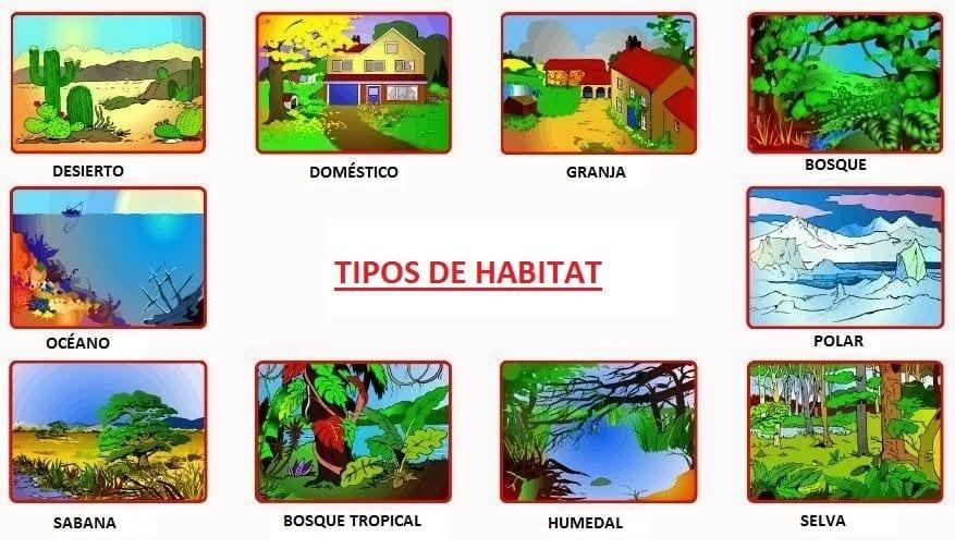 Tipos de hábitats en los ecosistemas