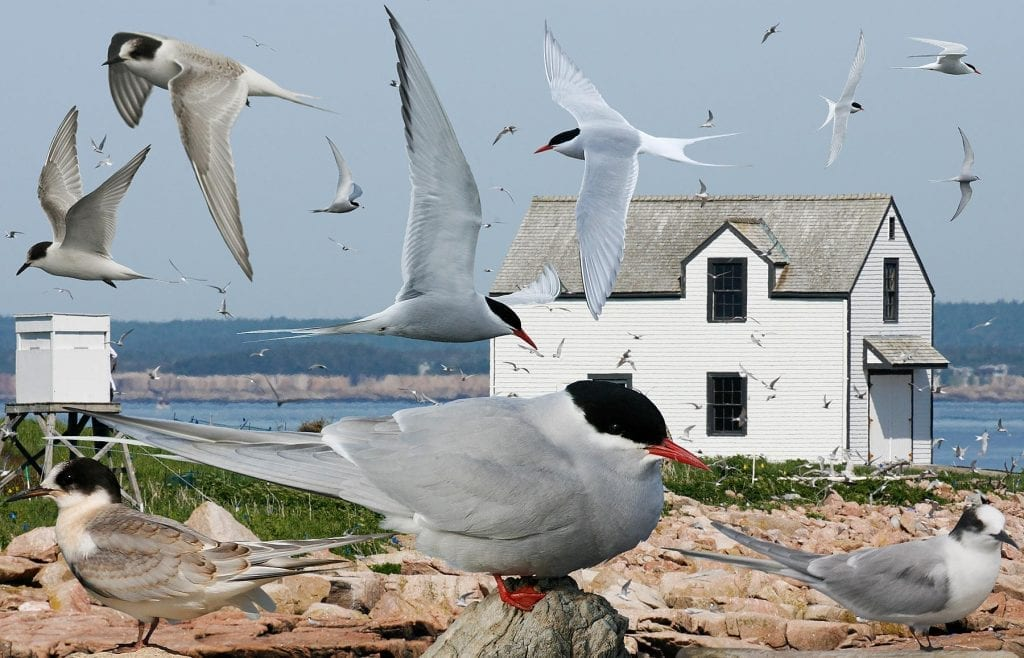 Aves del Ártico