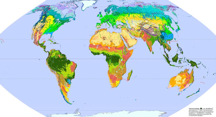 Tipos de biomas en el mundo