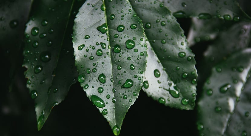 Hojas mojadas por la lluvia