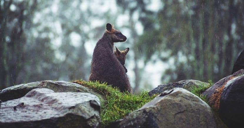 La lluvia condiciona algunos biomas