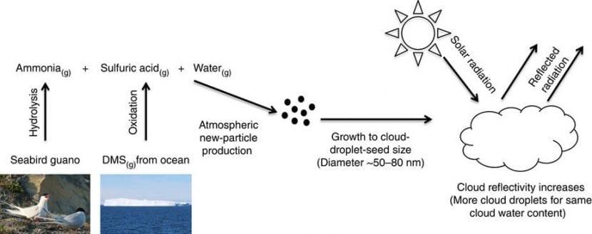 Las partículas de amoníaco que emergen del guano contribuyen a la formación de nubes.