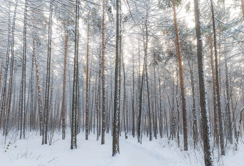 Tundra, biomas terrestres
