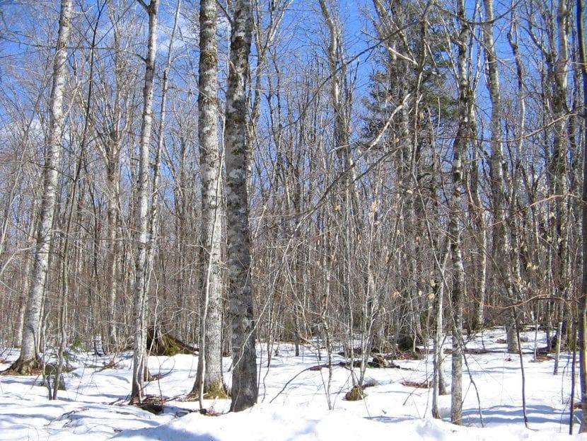 bosque-nevado