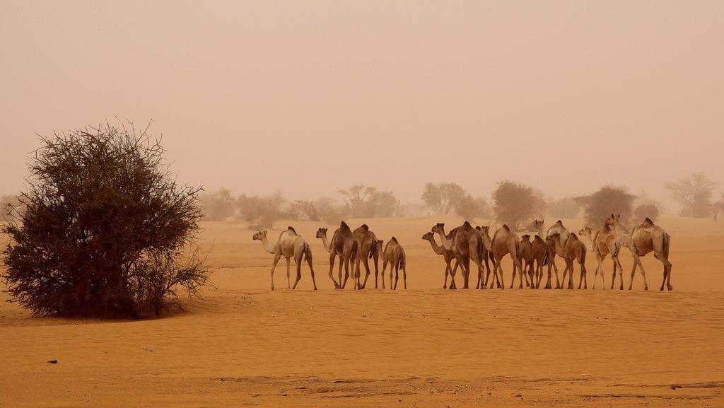 desierto-sudan
