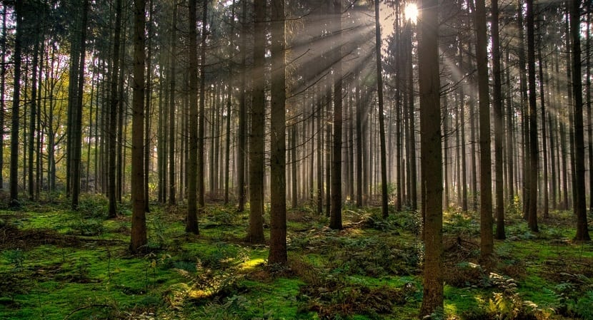 bosques sostenibles para el cambio climatico