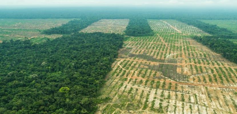 se talan los bosques para la agricultura