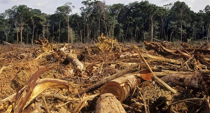 la deforestacion de los bosques contribuye a las emisiones de gases de efecto invernaderoye