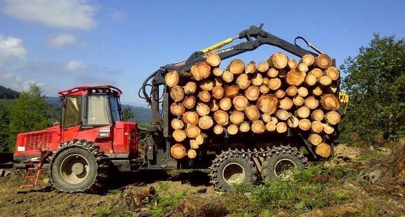 la explotación maderera puede aumentar las emisiones de carbono