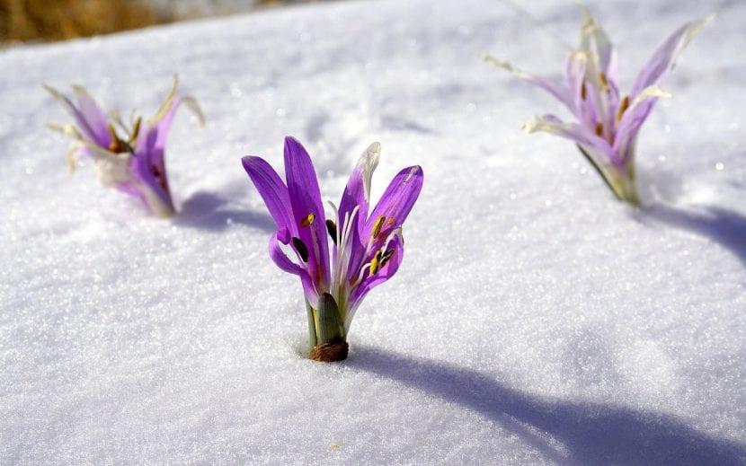 Flores brotando