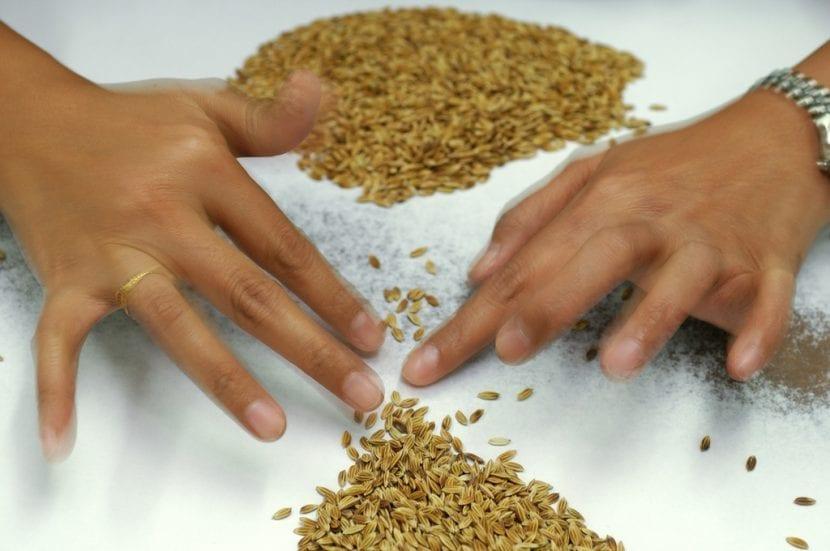 Seleccionando semillas