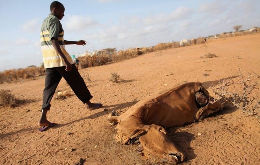 la sequia y la hambruna afectan a Somalia