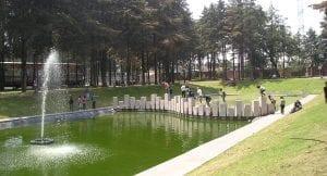vegetacion parques