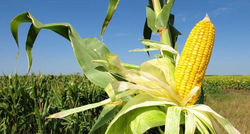 tecnología para que los agricultores se adapten al cambio climático