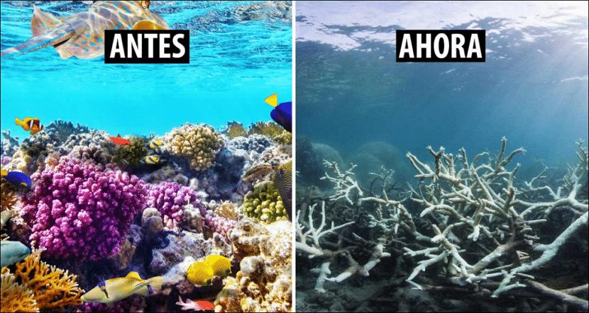 blanqueo de corales a causa del cambio climático