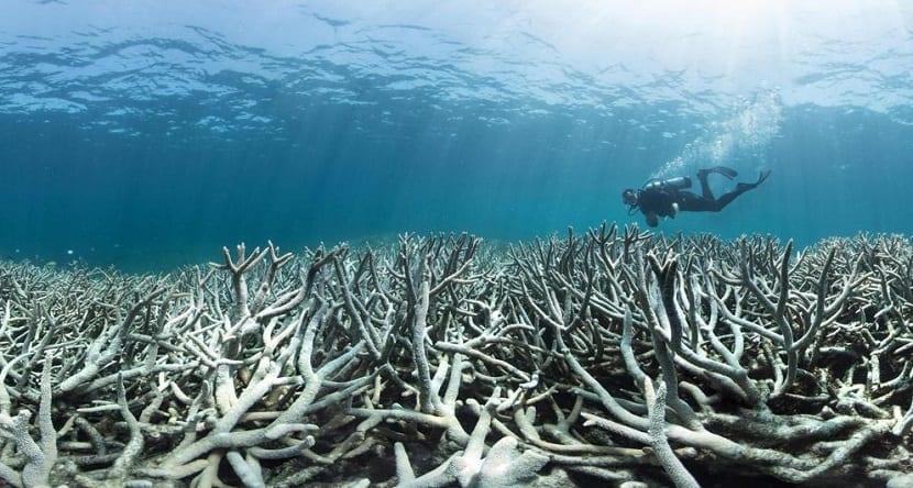 blanqueo de corales