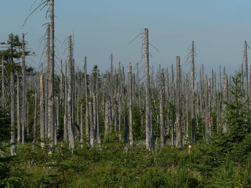 Bosque afectado por lluvia ácida
