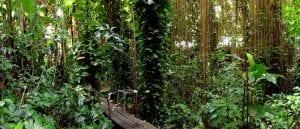 bosques para la lucha contra el cambio climático