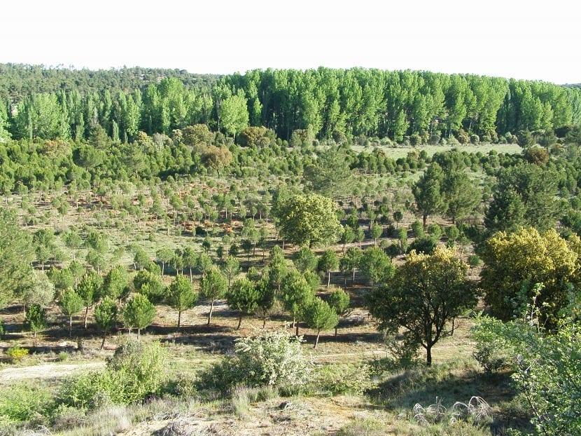 bosques sostenibles para el cambio climático