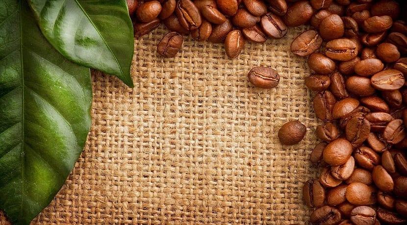 afección del cambio climático al cultivo del café